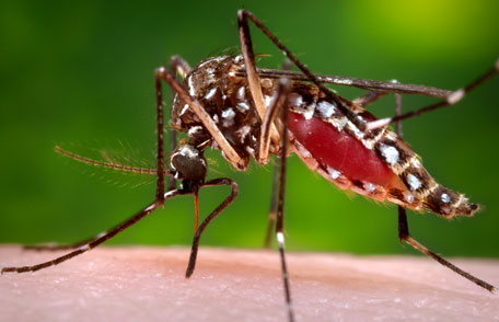 How To Get Rid Of Mosquitoes Without Chemicals Purelawn