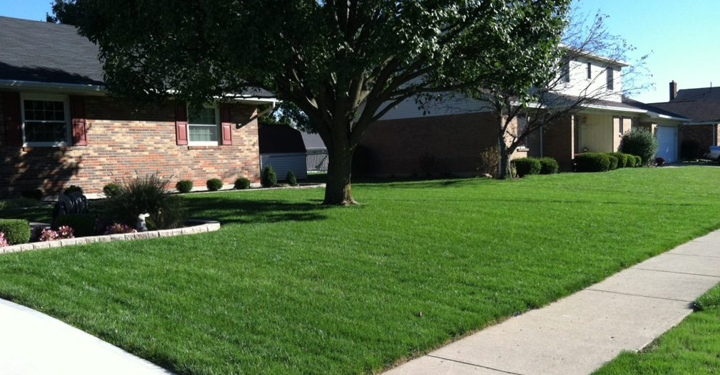 cincinnati lawn care purelawn organic lawncare - Lawncare