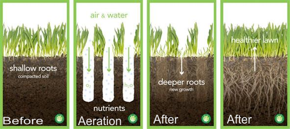 Why Aerate My Lawn The Benefits Of Core Aeration On Your