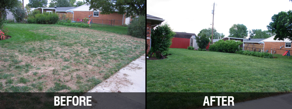 Before & After Lawn Care