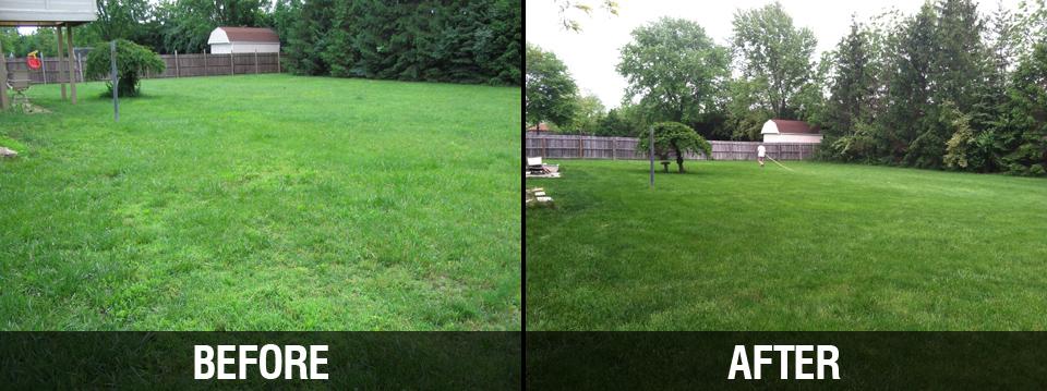 PureLawn Photo Gallery - Cincinnati & Dayton Organic Lawn ...