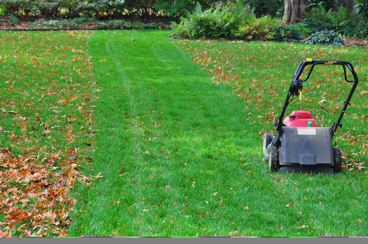 Should I Bag Or Mow The Leaves On My Lawn Purelawn