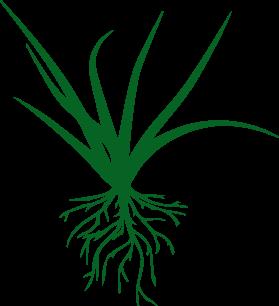 Organic Turf Food