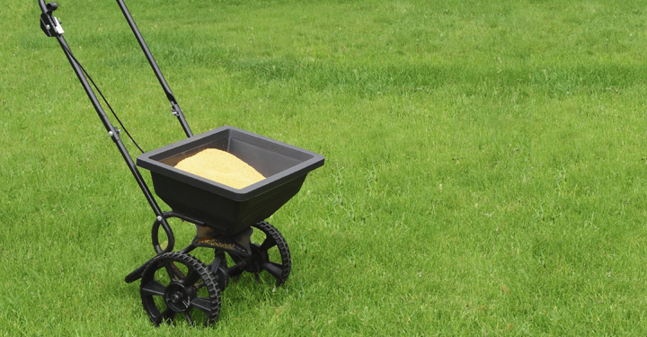 When is the best time to fertilize a lawn?